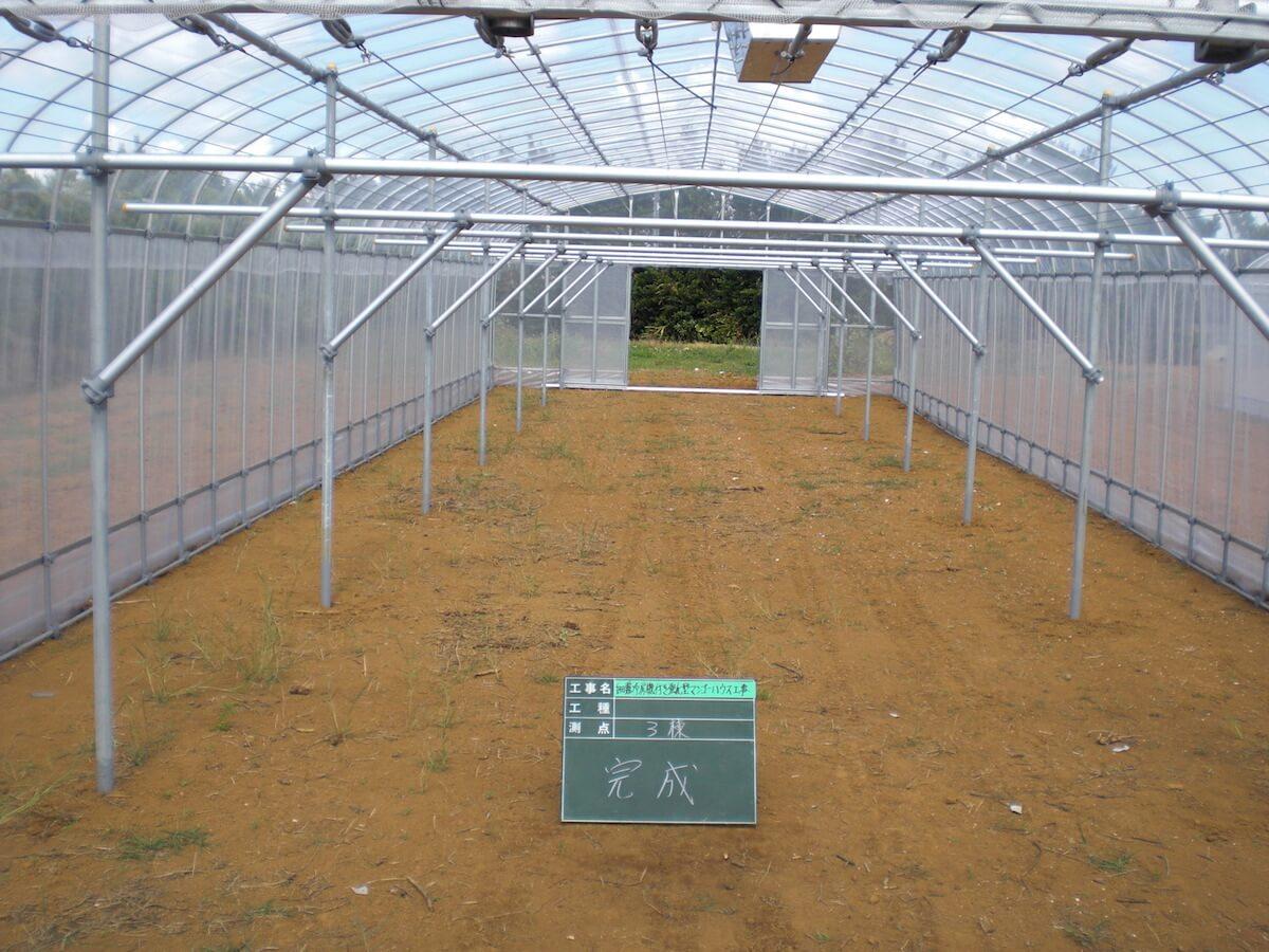 φ25パイプハウス補強型 作物:マンゴー 現場:宮古島農業研究センター