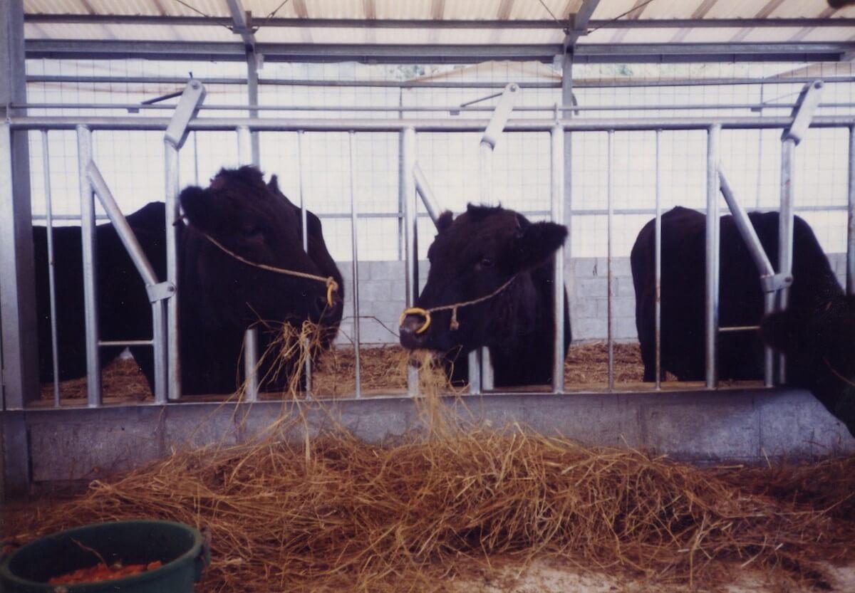 牛舎 現場:国頭村