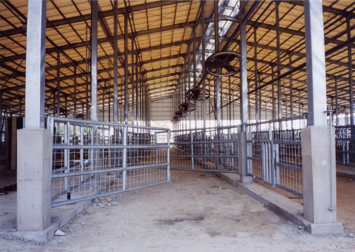 牛舎 現場:伊江島