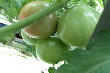 スーパーサンド栽培システム