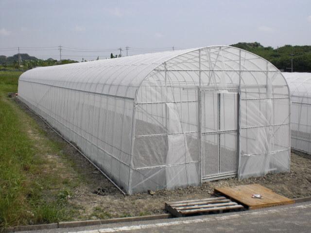 φ25パイプハウス 間口4m 作物:パッションフルーツ 現場:南城市